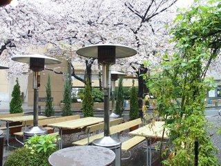 RANDY - 美しい桜が咲き乱れる桜坂の風景です
