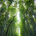 嵯峨野 - 竹林の道