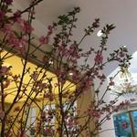 65844286 - 店内は桜が満開!