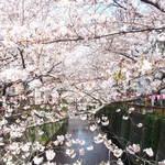 Crab House Eni - 目黒川の美しい桜です