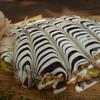アカトキ - 料理写真:アップで