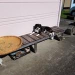 65992397 - 「看板犬」