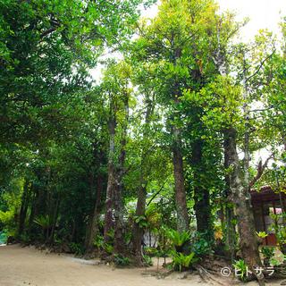 備瀬のフクギ並木に守られる古民家で味わう郷土の味