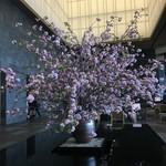 ザ・ラウンジ byアマン - ラウンジには、桜の木!