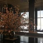 ザ・ラウンジ byアマン - 大きな桜