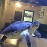 Bistro Archange - カメが泳ぐ店内
