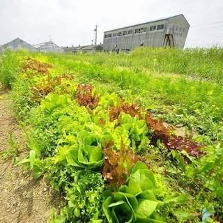 """自社菜園""""ベジモ畑""""から届く、年間80種類の旬野菜たち◎"""