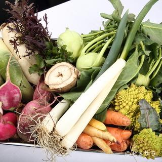 旬の採れたて野菜をふんだんに使用