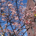 和食処天匠 - 季節外れの桜が…