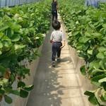 長島農園 - 内観写真: