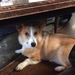 ドッグベリー - テーブルの下で