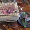 千年鮭 井筒屋 - 料理写真:塩引鮭