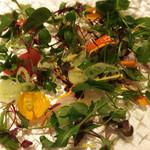 66657813 - 前菜  魚のカルパッチョ 炙ったカマス・アジ・白身のお魚(カサゴ系?失念…)、お野菜に埋もれて見えませんが(^_^;)