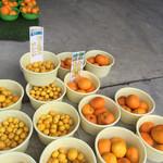 みかん問屋(有)石澤商店 - ゴールデンオレンジ、小さい程美味しいです!