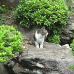 66738447 - 庭でくつろぐ猫さん