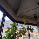 TRACTION book cafe - 天井にモコモコとしたものが