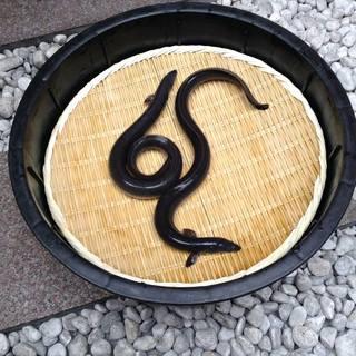 幻の鰻「共水」・匠の鰻「兼光」・オーガニック鰻「泰正」