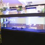 キッチンカフェ ペスカ - 店内の深海魚が泳ぐ水槽