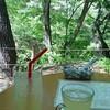 森のカフエKISEKI - ドリンク写真: