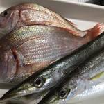 ん。 - 20170512、春子鯛、カマスをお刺身で。久しぶりの入荷のコノシロは酢〆にしたのでそのままでも酢の物でも。 お勧めはアジ。鮮度バツグンなので刺身、塩焼き、フライ他、何でもござれです。 野菜は赤軸の水菜、葉っぱの柔らかな生食用の小松菜、ハンサムレタス、江の島で自生しているツルナなど。