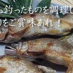 小波 - 毎朝直接市場に出かけ 新鮮なお魚を仕入れています。