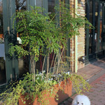カフェ ラ・ボエム - 西陽が当たるプラチナ通り