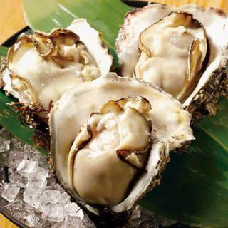 【海のミルク『天然岩牡蠣』】