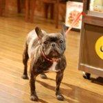 CAFE&FOODSBAR KOKOPELLI - 可愛い犬