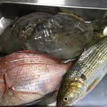 ん。 - 20170519、今日も生しらすを買えました。全体的な漁は少なめでしたが少しずつ安定してきたのかな。粒は小さめですが良いしらすですよ。 魚はカワハギ、肝パンと言うほどではないですが。他には小鯛、コノシロ、カマスなど。 野菜はアヤメカブ、赤軸のほうれん草。 合わせるお酒は京都伏見の京姫酒造さんの「こんちきちん」。 今日はこんな感じで皆様のお越しをお待ちしています。