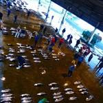 魚問屋・廻船問屋 加治安 - 朝7時から市場のセリを見学