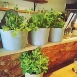 ジェイティード カフェ - 店内は緑いっぱい(о´∀`о)