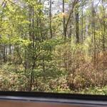 手作りパンカフェ・ピクニック - 窓からの景色