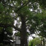 珈琲館 くすの樹 - くすの木