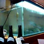 すし処わさび亭 - 店内の水槽では鯵が泳いでいます