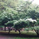 Mr.FARMER - 雨上がりの駒沢公園
