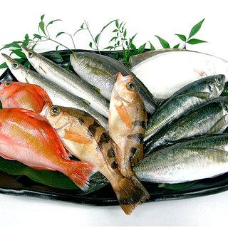 ≪鮮魚命!≫相模湾・小田原漁港で水揚げされる地魚