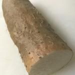 道の駅はわい アロハ大市場 - 砂丘ながいもの花粉をいちょう芋に交配した新品種「ねばりっ娘」