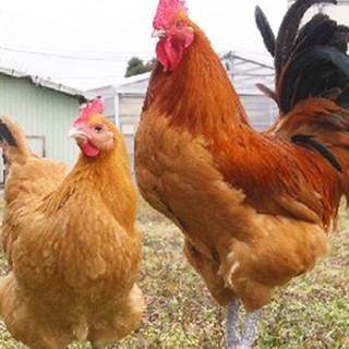 養鶏場直営の強みと魅力