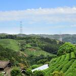 67901380 - 新茶の季節。和束に来ました