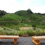 和束茶カフェ - 和束を代表する石寺の茶畑(2017.5月)