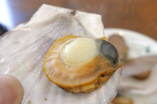 帆立小屋 - ほたて稚貝酒蒸しは、柔らかな食感とホタテならではの甘味に加えて、磯の香り満点!旅行気分をしっかりと味わえる一品です。