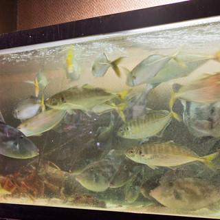 ★毎日活魚が長浜漁港より直送されます!超新鮮です!