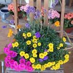 花てらす カフェ&フラワー -