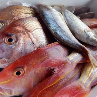 『山口県萩大島船団丸』漁師直送の鮮魚