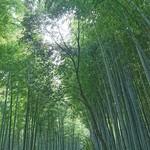 68525714 - 竹林の小径