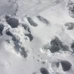 68528082 - 雪の足跡