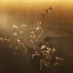 808TOKYO - AZU KIMURAさんの作品