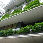 68692185 - 柳通側のこちらのビルの空中庭園