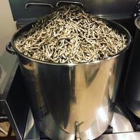 吟醸煮干 灯花紅猿 - 1杯に約100gの厳選煮干を使用しております。