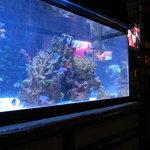 マカン マカン - 大きな水槽♪熱帯魚がきれいです。